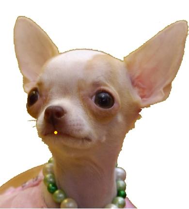 tete de chien pour Aide et tutorial pour faire une carte virtuelle en morphing avec FotoMorph
