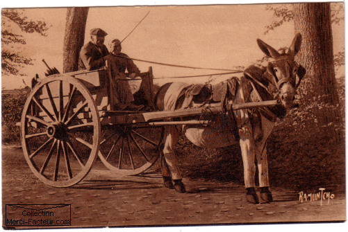 ane avec culotte à l'ile de Ré sur une carte postale ancienne