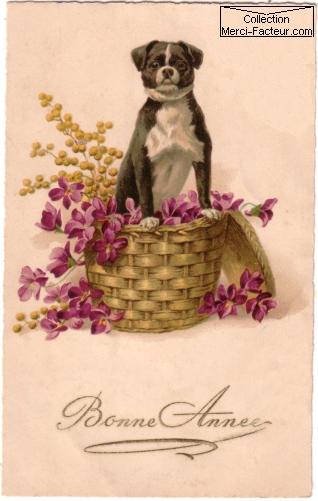 Carte postale ancienne d'un petit chien pour bonne année
