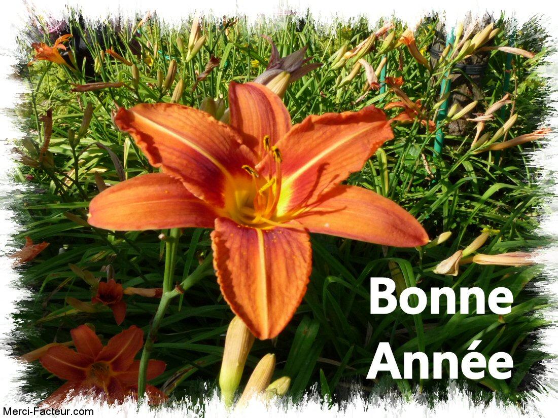 carte de voeux gratuite Belle fleur orange
