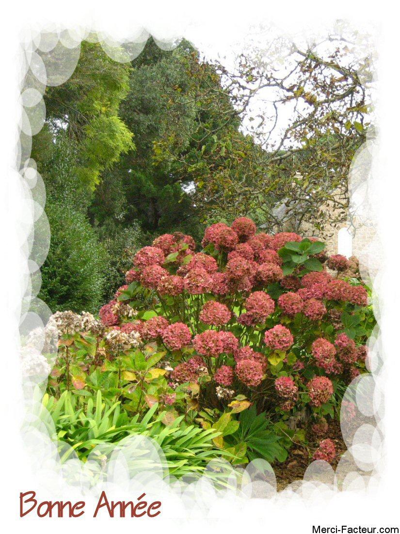 carte de voeux gratuite de belles fleurs
