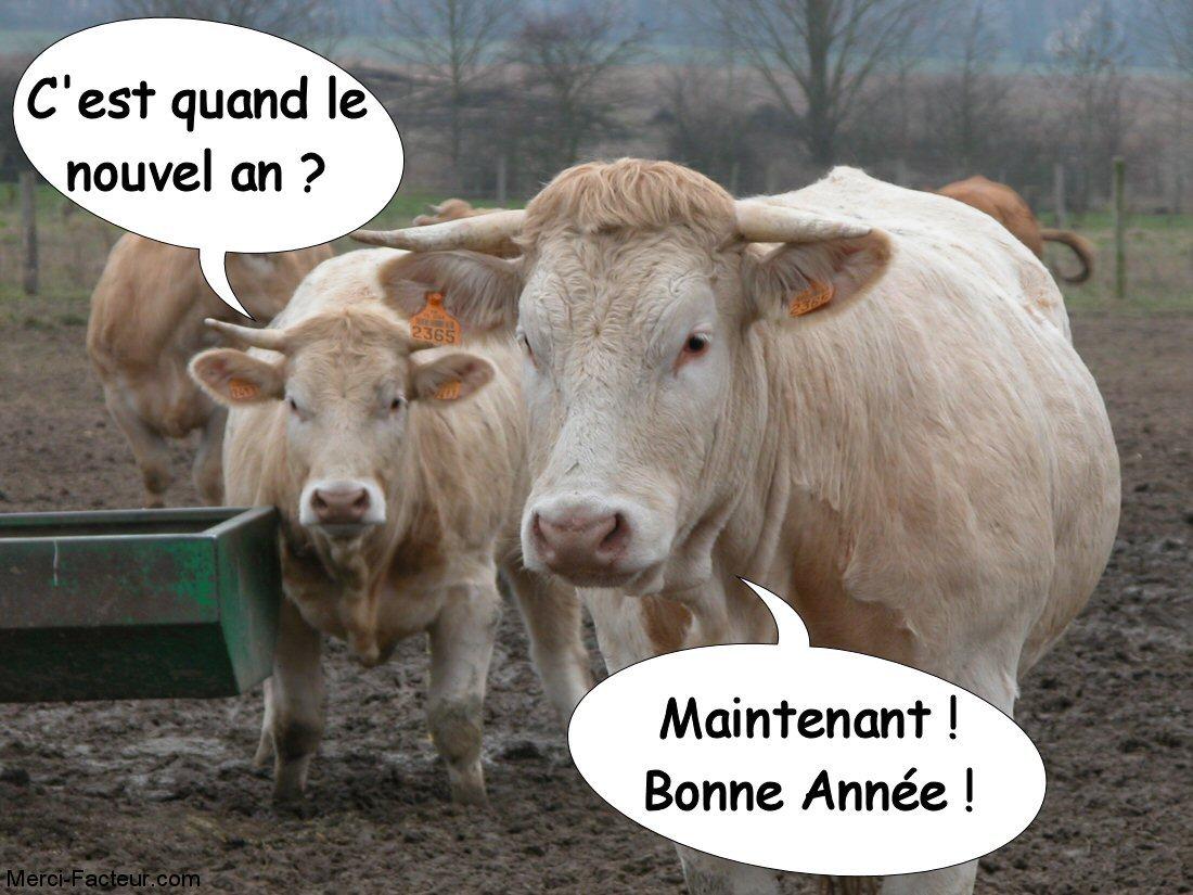carte de voeux gratuite une vache qui dit c'est quand le nouvel an et l'autre réponse maintenant