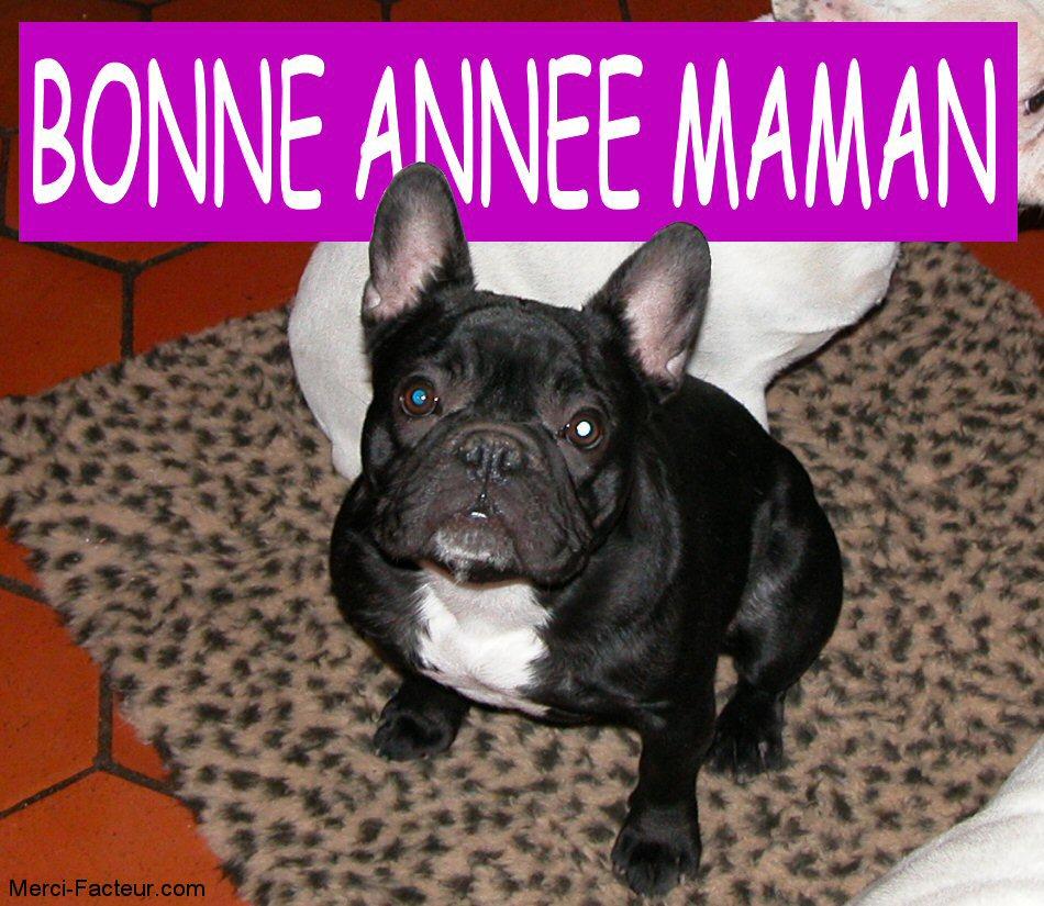 carte de voeux gratuite un petit chien tout noir