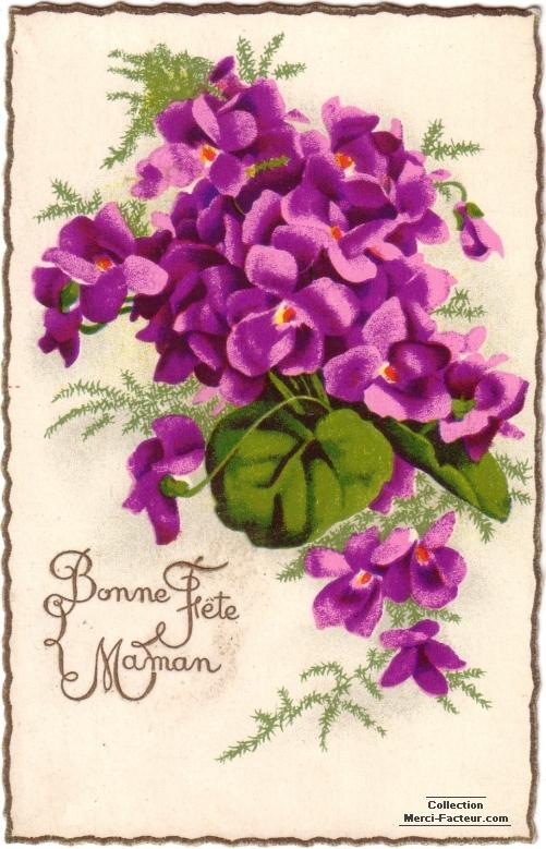 Bonne fete Maman violettes