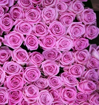 bourquet de rose pour carte de fête des mères